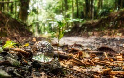 NaturwaldErhalter – Unser neues Produkt