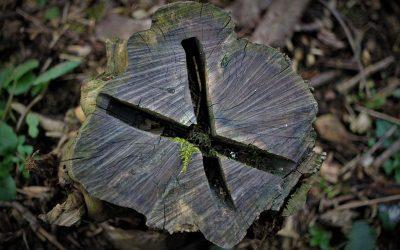 Was tun gegen Entwaldung?