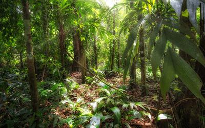 Kann der Wald das Klima retten?