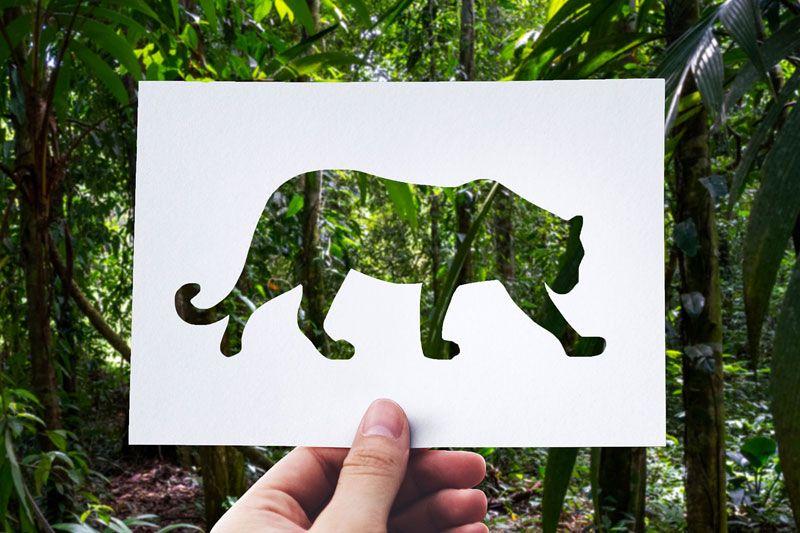 Der Jaguar: Verehrt und gefürchtet